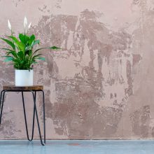 house plant in front of a wall